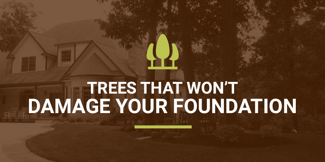 Trees That Damage Foundations